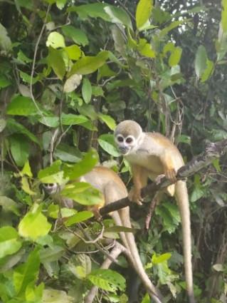 BOM DIA Amazonia! Pernoite na selva 2 dias de passeio